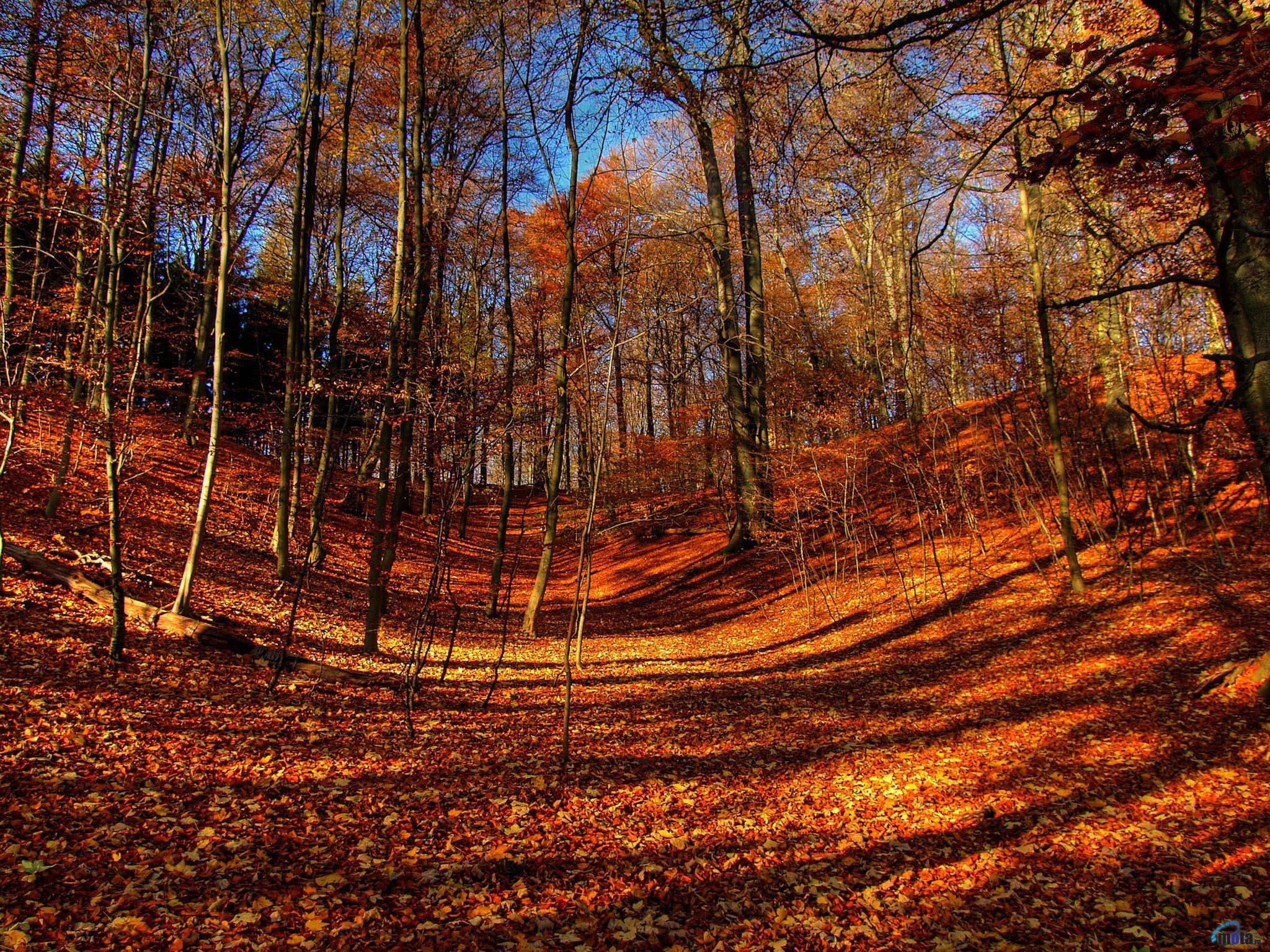 Прекрасная осень (22 фото) Фото, картинки, видео, приколы и лучшие